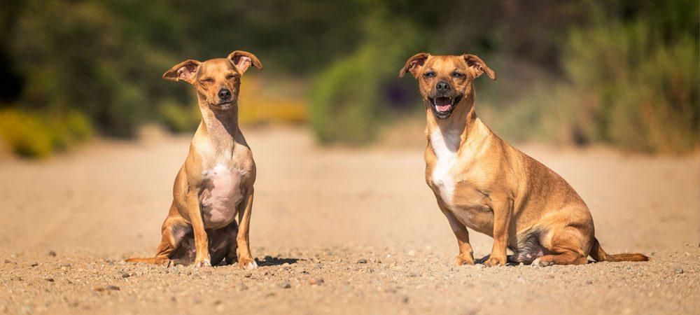 10 Benefícios da Castração para o seu cão
