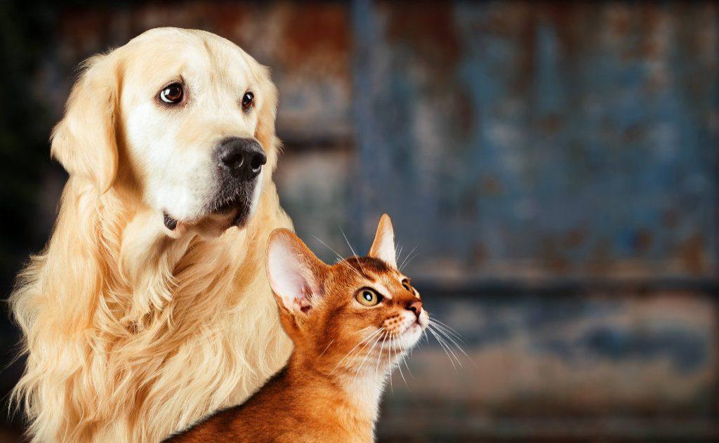 Vacinação em cães e em gatos: tudo o que você precisa saber