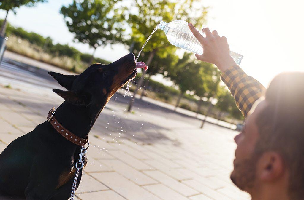 Cuidados essenciais com seu pet no verão
