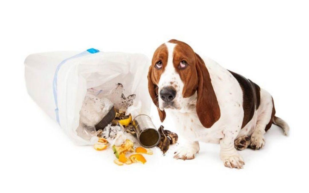 Intoxicação canina: fique atento aos sinais